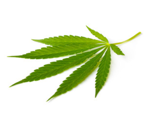 Cannabis and its influence on blood pressure?